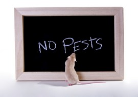 No pests