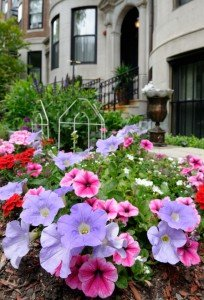 apartment flowers pink purple