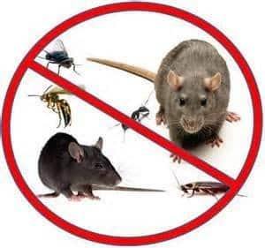 no rodents
