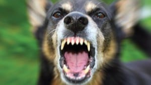 Dangerous Dogs:What Landlords Need to Know
