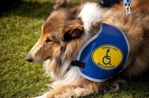 service dog pets