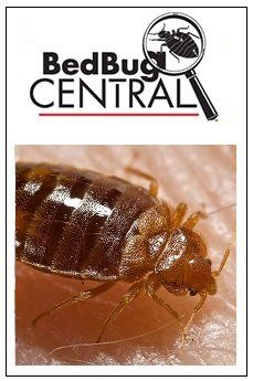 Bed Bug Treatment 101