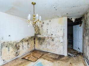 mold water damage