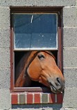 Horse and window